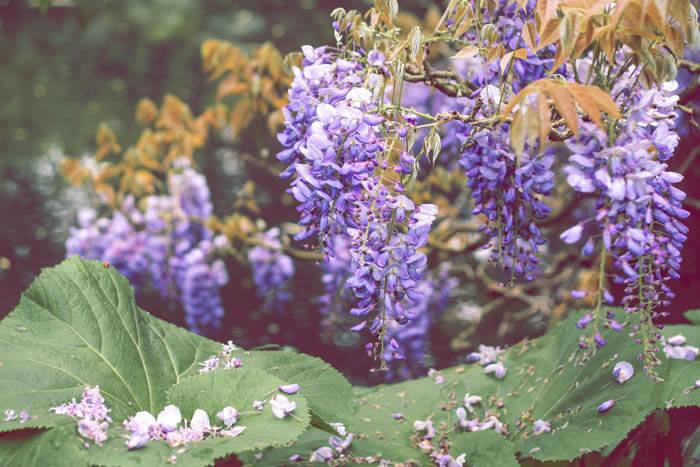 primavera-copel-colchoes (2)_1