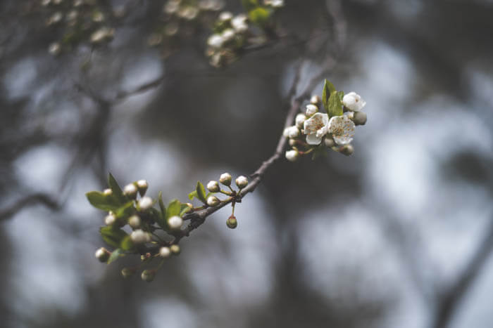 primavera-copel-colchoes (3)_1