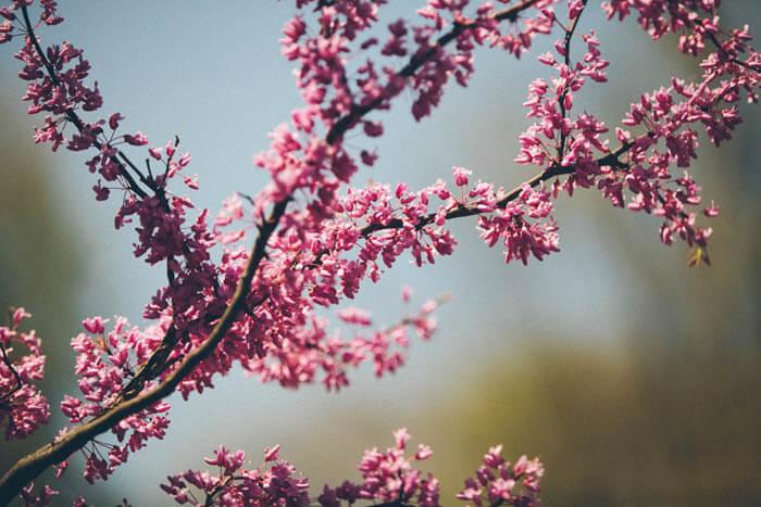 primavera-copel-colchoes (4)_1